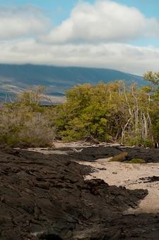 Roches de lave, punta espinoza, île fernandina, îles galapagos, équateur