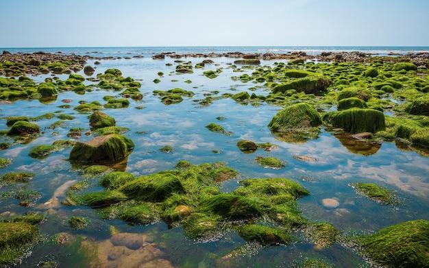 Roches et mousse sur le fond marin à marée basse sur la côte jurrassique dans le sud de l'angleterre charmouth beach royaume-uni
