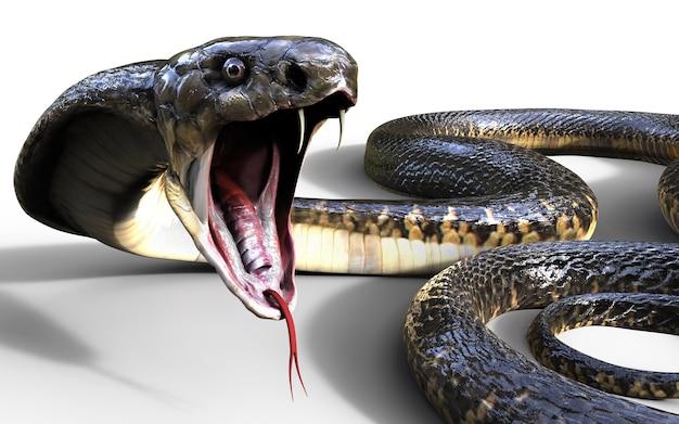 Roi cobra 3d le plus long serpent venimeux du monde isolé sur fond blanc