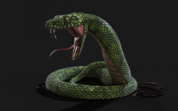 Roi cobra
