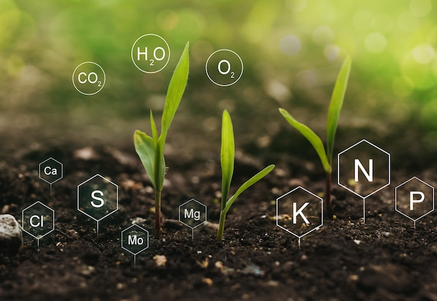 Rôle des nutriments minéraux dans les plantes de maïs et la vie du sol avec l'icône numérique des nutriments minéraux