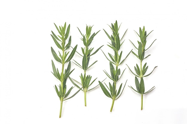 Romarin vert frais isolé sur blanc, vue de dessus. herbe aromatique.