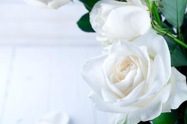 Rose blanche sur un fond