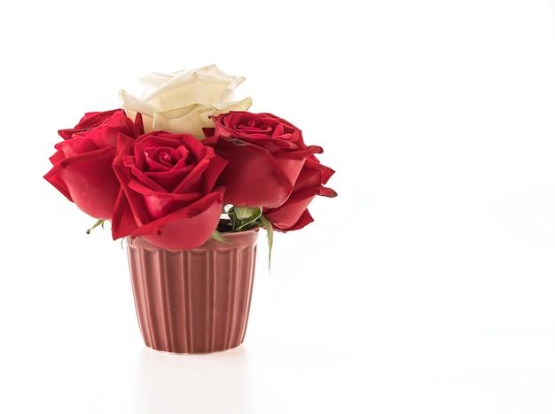 Rose blanche et rouge sur blanc