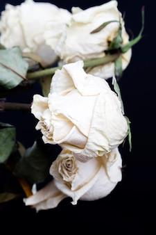 Rose blanche sèche