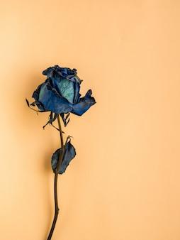Rose bleue séchée