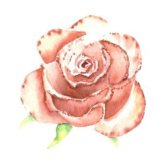 Rose couleur pêche, bourgeon ouvert. illustration à l'aquarelle. clipart isolé sur fond blanc. il peut être utilisé pour des invitations, des cartes postales, etc.