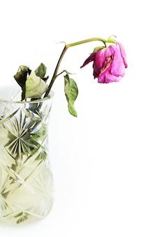 Rose fanée dans un vase en cristal sur fond blanc isolé.