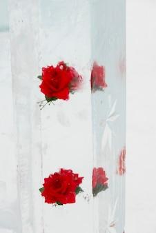Rose gelée dans une colonne de glace, parc national banff, alberta, canada
