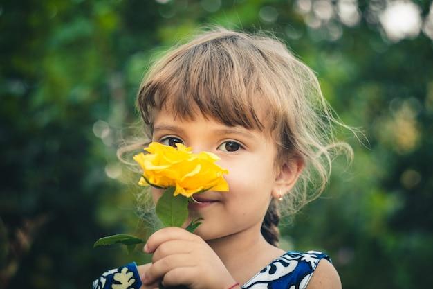 Rose jaune jeune jardinier