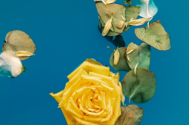 Rose jaune plate et feuilles dans l'eau avec espace de copie