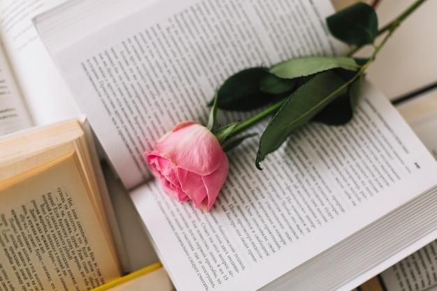 Rose sur le livre ouvert