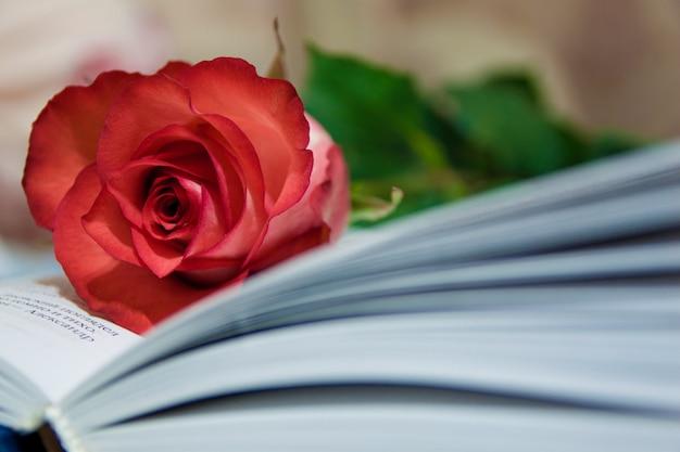Rose et livre