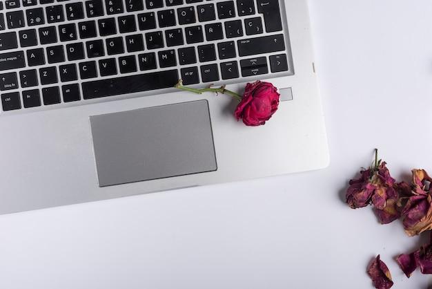 Rose avec pétales presque fanés sur ordinateur portable argenté et blanc