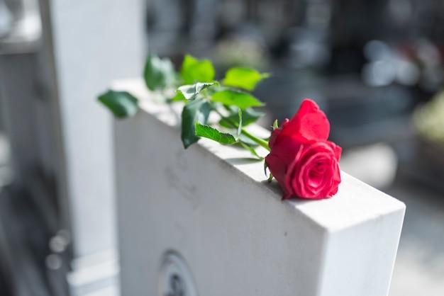 Rose sur pierre tombale.