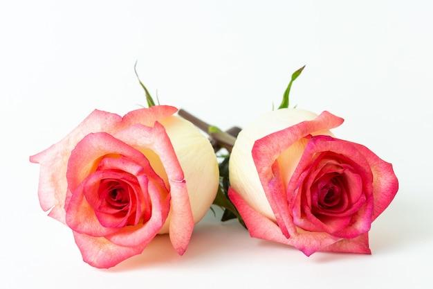 Rose présente pour la saint valentin