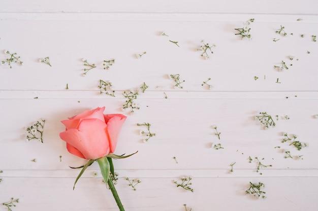 Rose rose sur la gauche entourée de petites fleurs sur fond blanc