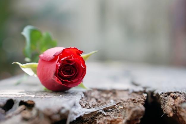 Rose rouge sur bois, icône de l'amour