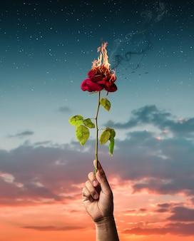 Rose rouge brûlante tenue à la main. concept d'amour avec fleur et feu