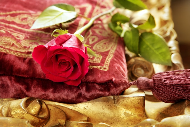 Rose rouge classique sur un coussin de velours vintage brodé