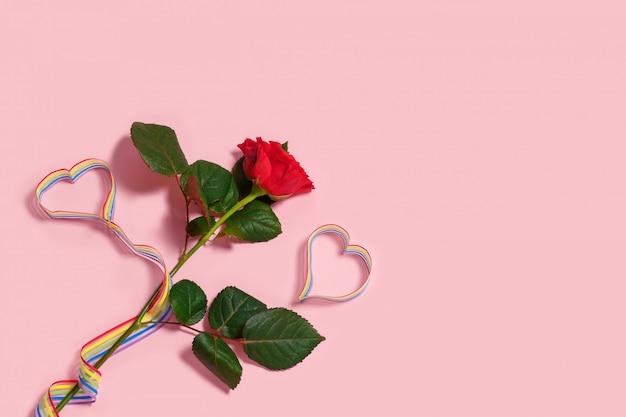 Rose rouge et communauté lgbt fierté ruban arc-en-ciel conscience sur fond rose.
