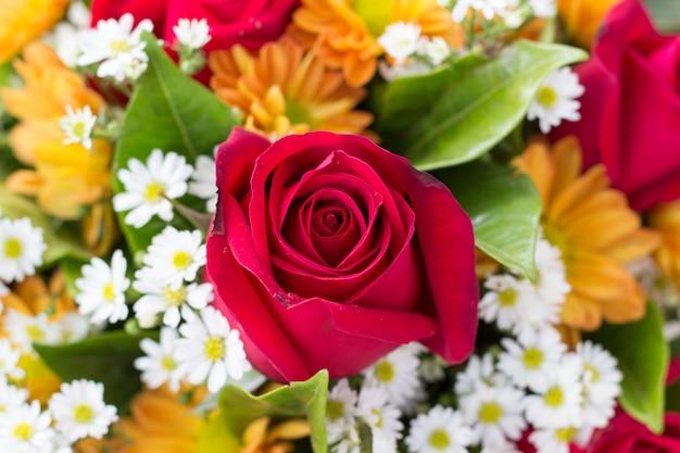 Rose rouge pour valentine