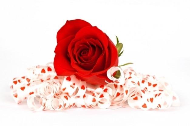Rose rouge et rubans