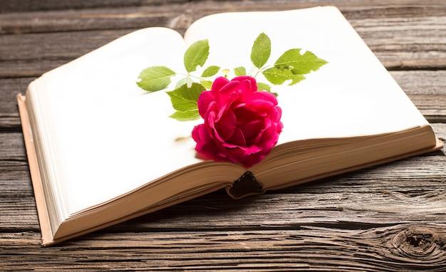 Rose rouge se trouve sur un livre