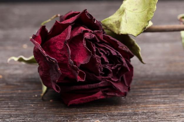 Rose rouge séchée