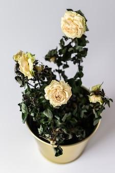 Une rose séchée dans un pot en or