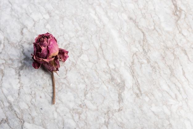 Rose séchée sur marbre dans un plan zénithal avec un espace vide sur la gauche