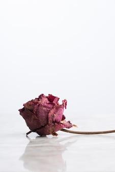 Rose séchée sur marbre avec reflet vertical