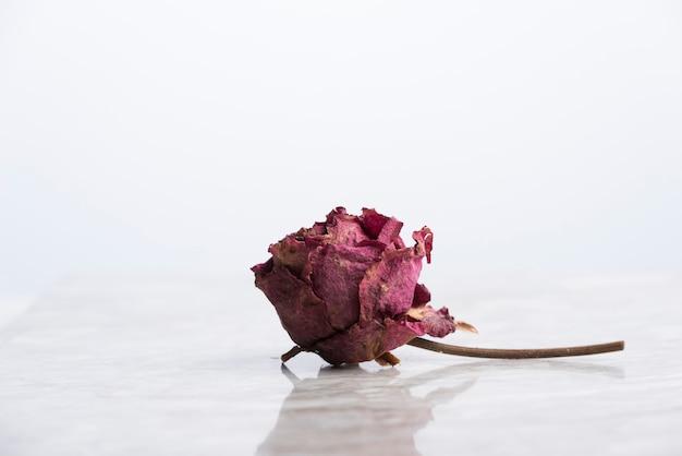 Rose séchée sur marbre avec reflet