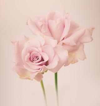 Rose vintage fleurs