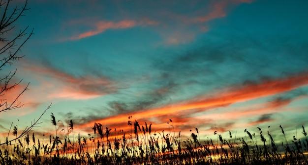 Roseau fond ciel soir soleil lever du soleil lumière matin