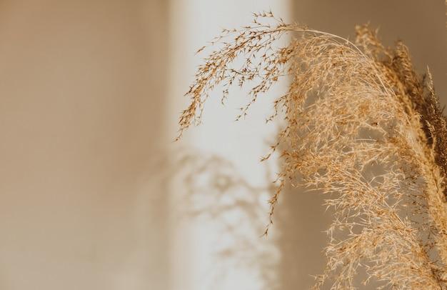 Roseaux beiges debout sur le mur. lumières du matin de la fenêtre. mise au point sélective, gros plan