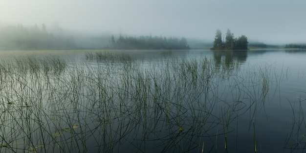 Roseaux poussant dans le lac, kenora, lac des bois, ontario, canada