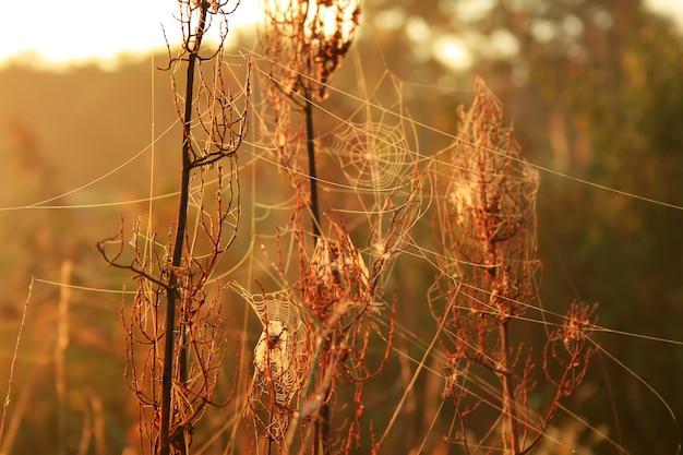 Rosée du matin sur les toiles d'araignées