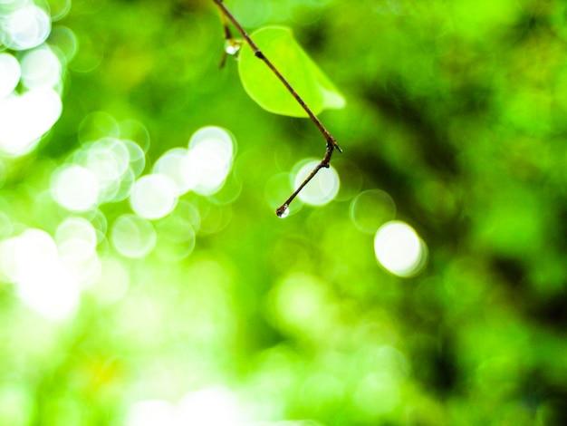 Rosée goutte d'eau feuille verte idée de concept nature fraîche
