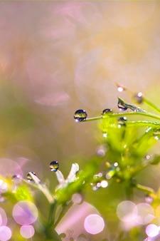 Rosée sur l'herbe dans la nature