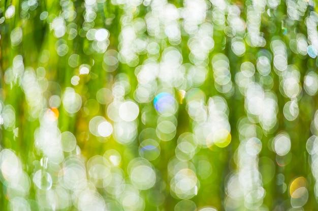 Rosée matinale défocalisée sur l'herbe