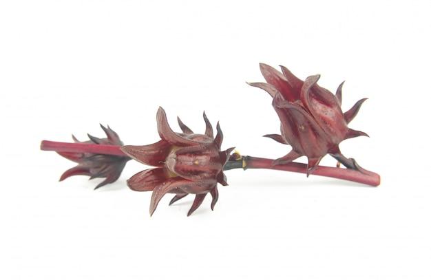 Roselle, jamaïcain sorelor ou hibiscus sabdariffa isolé