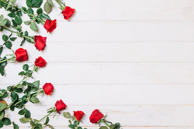 Roses allongées en demi-cercle