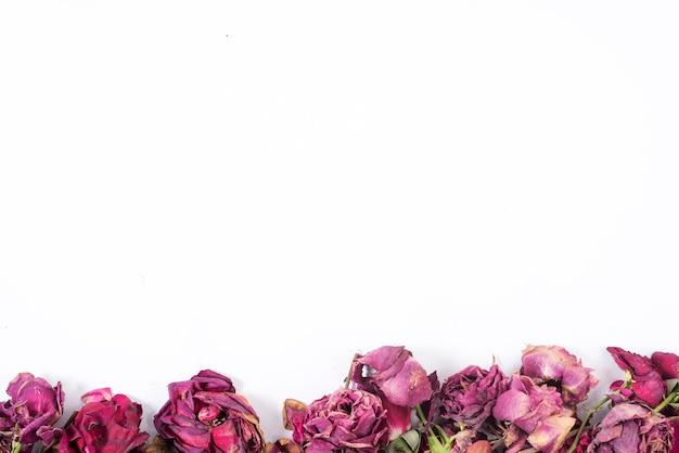 Roses en bas du cadre