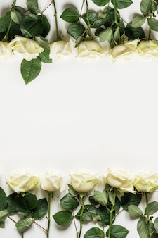 Roses blanches comme cadre sur blanc