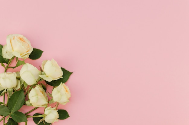 Roses blanches romantiques avec espace copie