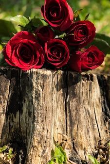 Roses sur bois. fond du concept de jour de la saint-valentin et le concept de l'amour. copier l'espace pour le texte.