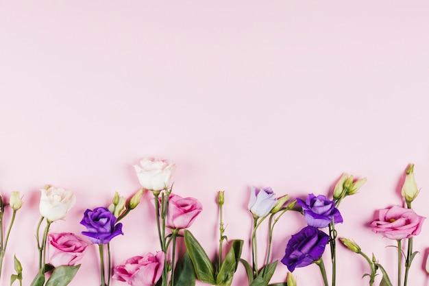Roses colorées décoratives