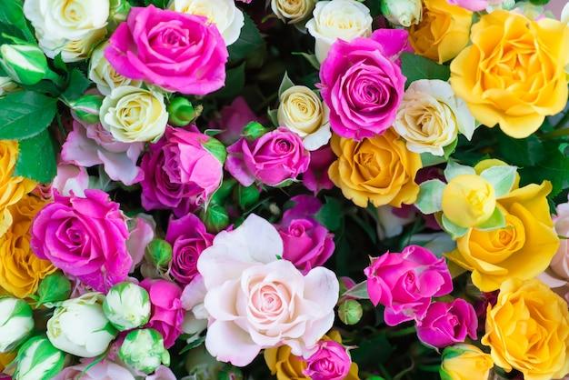 Roses colorées fraîches avec des feuilles vertes - fond ensoleillé de printemps nature. flou artistique et bokeh