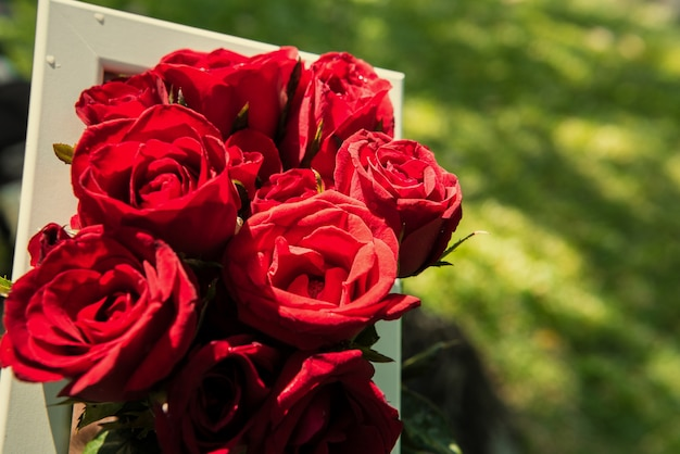 Roses dans un cadre blanc avec fond de verre. fond du concept de jour de la saint-valentin et le concept de l'amour.